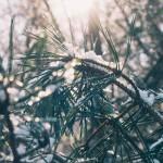Sofia-Pauls-Blog-Geschichte